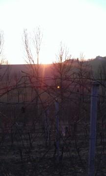 Il tramonto in vigna